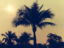 Palm trees vintage. Palm trees on the beautiful sunset background Royalty Free Stock Image