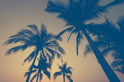 Palm trees vintage Stock Photography