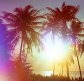 Palm trees Royalty Free Stock Photos