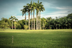 Palm trees in vintage style Royalty Free Stock Photography