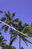 Palm trees and volleyball net Stock Image