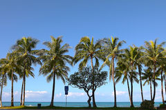 Palm trees at Waikiki Beach, Hawaii Royalty Free Stock Photos