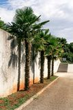 Palm trees by the wall Royalty Free Stock Images