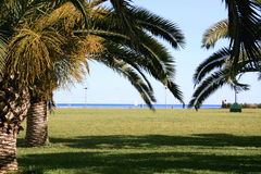 Palm trees and water. Palm trees and grass close to waters edge Royalty Free Stock Photo