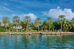 Palm trees by water in Biscayne Bay near Miami, USA stock images