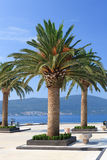 Palm trees waterfront plaza Royalty Free Stock Photography