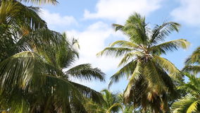 Palm trees waving on soft wind stock video footage