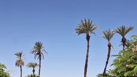 Palm trees waving in the wind stock footage