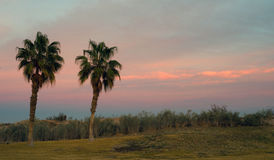 Palm Trees West Coast Tropical California Sunset Stock Photography
