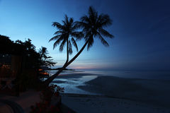Palm trees. Whit sunrise on the background Royalty Free Stock Images