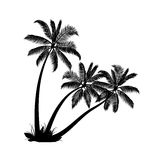 Palm trees. On white background Stock Photo
