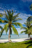 Palm trees on a White Beach Royalty Free Stock Photos