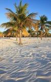 Palm trees on the white sand. Playa Sirena. Cayo Largo. Cuba Stock Photo