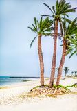 Palm trees on white sand beach Royalty Free Stock Photography