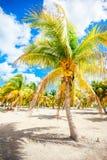 Palm trees on white sand beach on Holbox island, Mexico Royalty Free Stock Photo