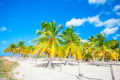 Palm trees on white sand beach on Holbox island, Mexico Stock Images
