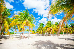 Palm trees on white sand beach Stock Images