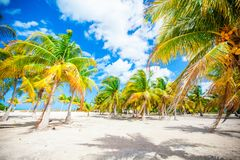 Palm trees on white sand beach Stock Photography