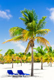 Palm trees on white sand beach with two loungers. Amazing tropical picture Royalty Free Stock Photography
