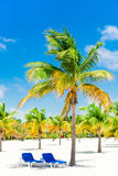 Palm trees on white sand beach with two loungers Royalty Free Stock Photo