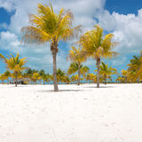 Palm trees on the white sand Stock Photography