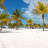 Palm trees on the white sand Royalty Free Stock Image