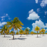 Palm trees on the white sand Royalty Free Stock Photo