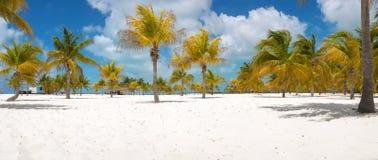 Palm trees on the white sand. Playa Sirena. Cayo Stock Image