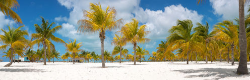 Palm trees on the white sand. Playa Sirena. Cayo Royalty Free Stock Photo