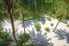 Palm Trees and white sand in sunny day Stock Photography