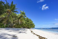 Palm trees, white sand and turquoise water at the beach of anse. Palm trees, white sand and turquoise water at the paradise beach of anse severe, la digue Stock Images