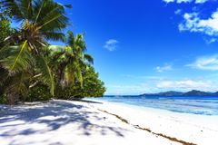 Palm trees, white sand and turquoise water at the beach of anse. Palm trees, white sand and turquoise water at the paradise beach of anse severe, la digue Royalty Free Stock Image