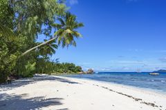 Palm trees, white sand and turquoise water at the beach of anse. Palm trees, white sand and turquoise water at the paradise beach of anse severe, la digue Stock Image