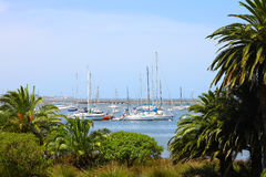 Palm trees and white yachts in the bay Stock Images