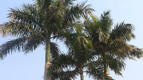 Palm trees in the wind stock footage