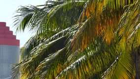 Palm trees in the wind stock video footage