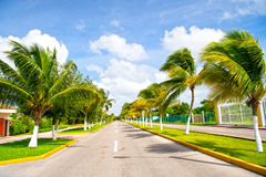 Palm trees in wind near road. Exotic highway grey road with green palm trees in sunny windy weather outdoor on blue sky with white clouds background royalty free stock photo