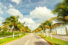 Palm trees in wind near road Stock Photography