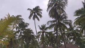 Palm trees with wind and rain 2