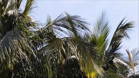 Palm trees in the wind on a tropical island stock video footage