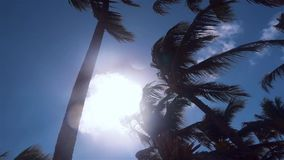 Palm trees wind on tropical island stock video