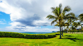 Palm trees in the wind under cloudy sky at the ocean Stock Photography