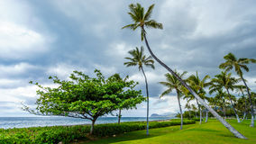 Palm trees in the wind under cloudy sky at the ocean Stock Photos