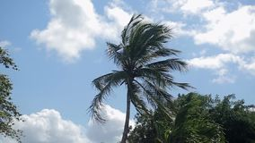 Palm trees in windy day. Shot stock footage
