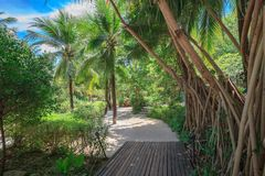 Palm Trees and the wooden path with sand in Thailand Royalty Free Stock Images