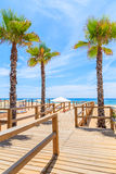Palm trees and wooden walkway to beach Stock Photos