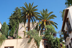 Palm trees in the yard, Granada Stock Photography