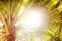Palm trees and yellow sun in a sky. Palm trees and yellow sun in a sky Royalty Free Stock Images