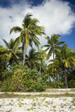 Palm trees on Zanzibar island. This is a shore line with palm trees on Zanzibar island, village Paje, Tanzania Royalty Free Stock Image