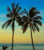 Palm treesl on island of Koh Samui Stock Photography